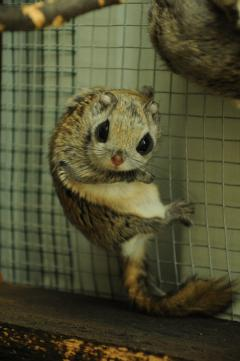 Japanisches Flächenmaß zootierliste de
