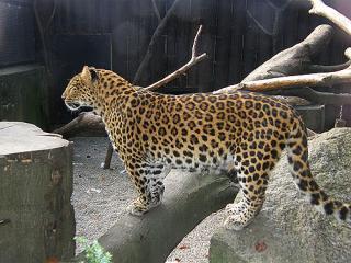 Vilvordevej 110 zoo ebeltoft