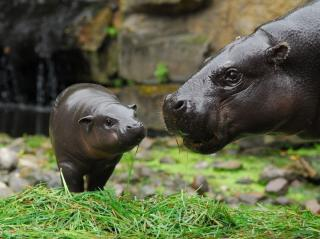Ungulate Zoo www.Zootierliste.de