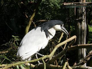 www.Zootierliste.de