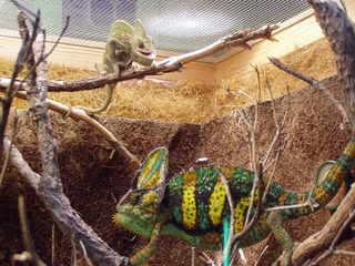 geckos kaufen in wuppertal