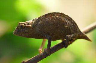 Zootierlistehomepage
